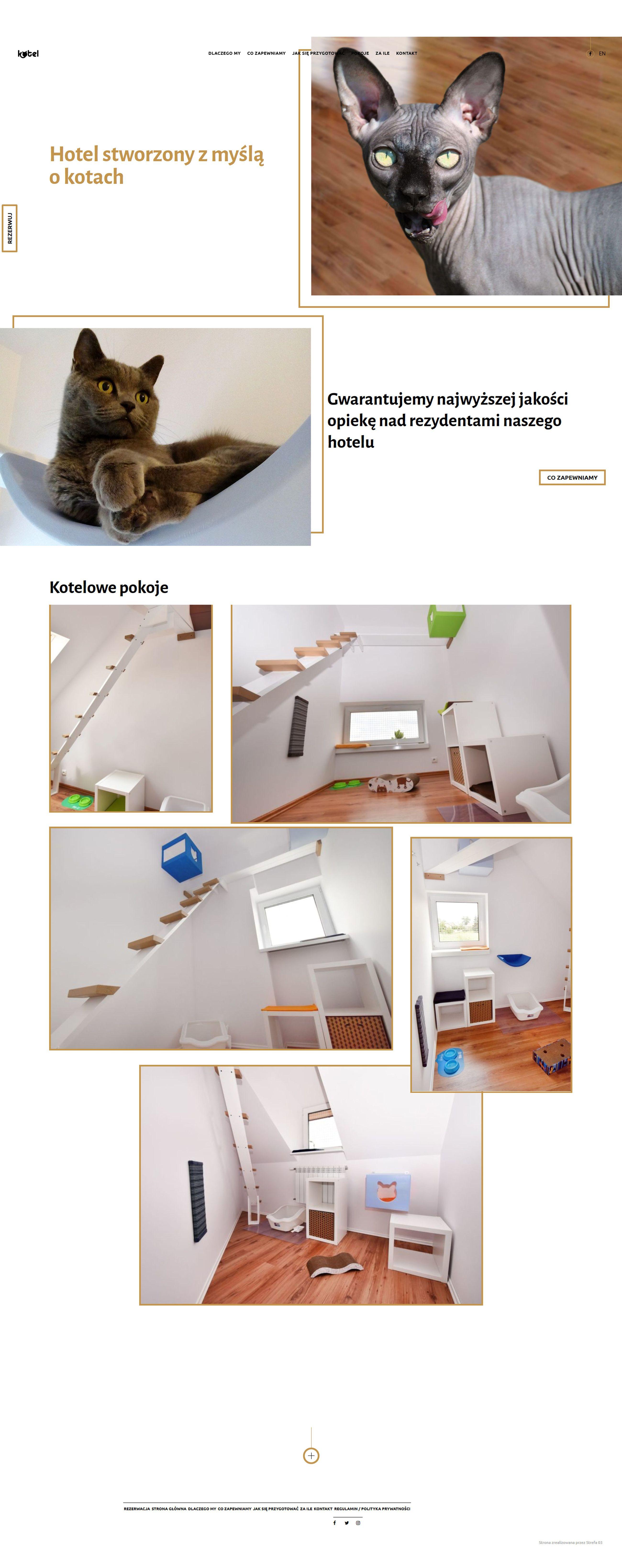 Projekt strony www dla hotelu dla kotów Kotel