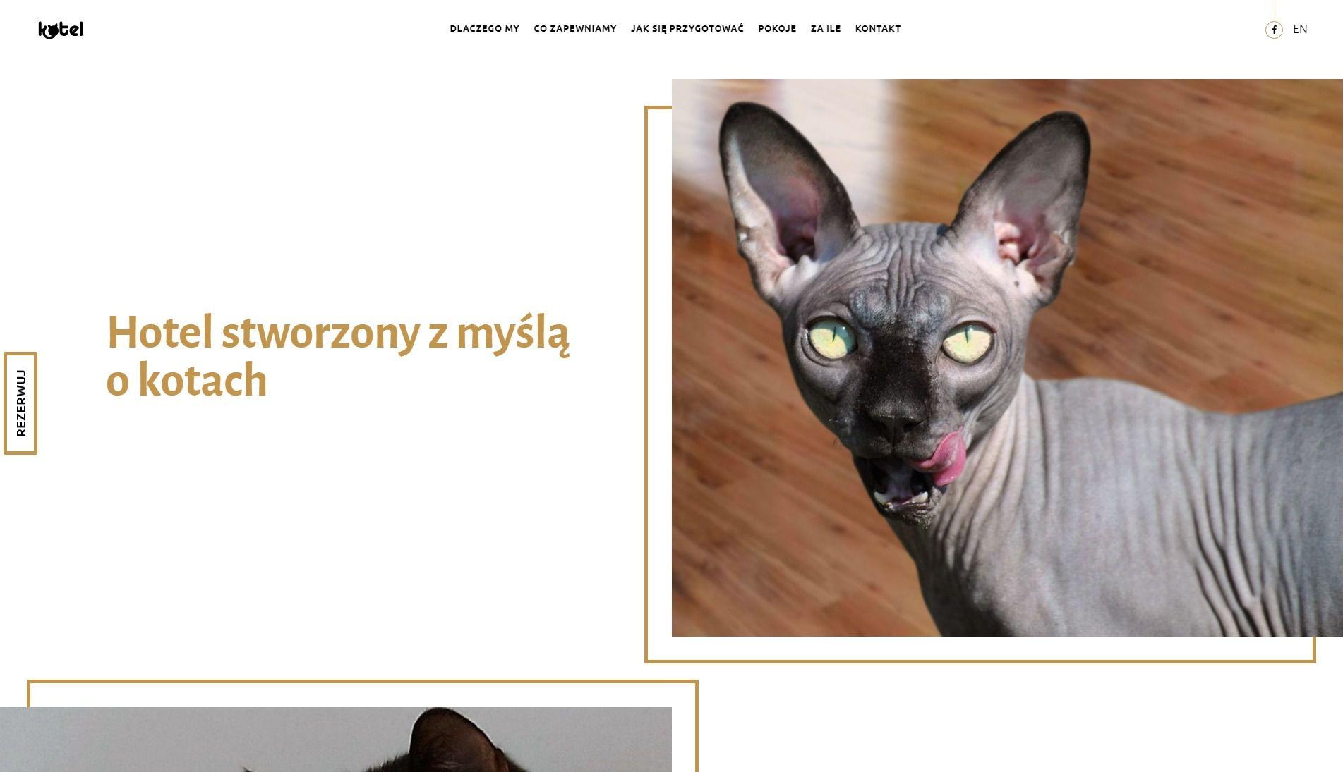 Projekt strony internetowej Kotel | UX UI Design